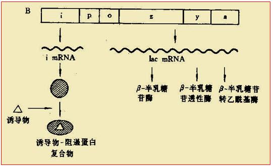 电路 电路图 电子 原理图 541_330